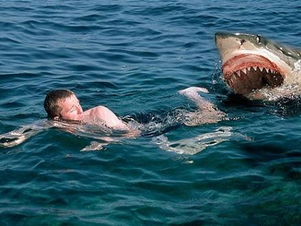 bliv en haj blod efter samleje