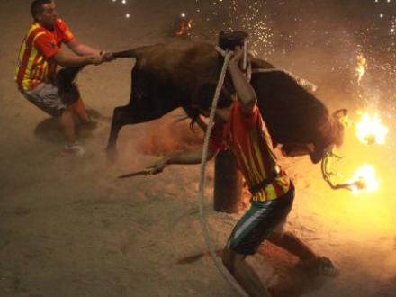 Balearerne vil forbyde tyre-show | Spanien i Dag